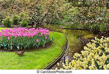Keukenhof, Netherlands - Spring landscape in park Keukenhof,...