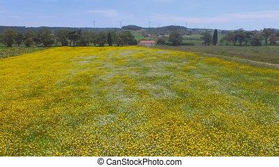 Spring landscape in Portugal