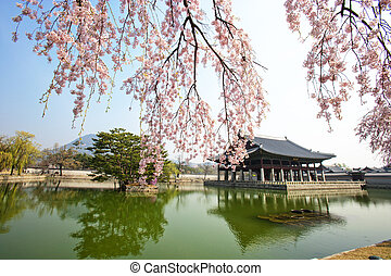 Spring Landscape in south korea Gyeongbokgung Palace