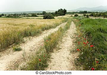 spring landscape in Spain