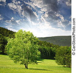 Sumava - Czech Republic - Spring landscape in the national...