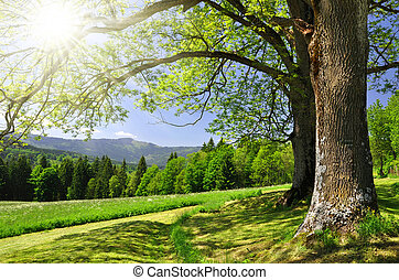 Spring landscape in the national park Sumava - Czech ...