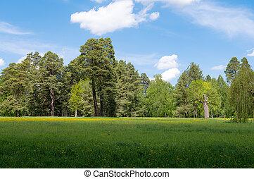 spring landscape in the park