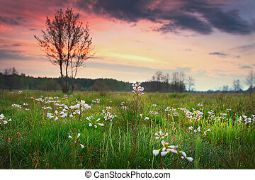 Spring landscape of a green meadow in the morning at dawn with a blurred background