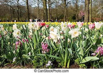 spring landscape of flowers in Park