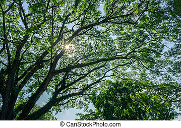 spring landscape of trees against the sky