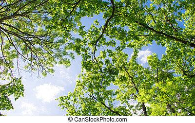 spring landscape of trees
