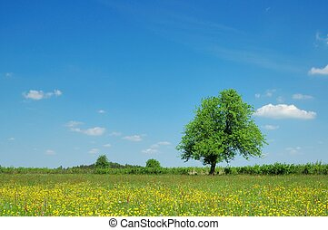 Spring Landscape - Meadow, blue sky and tree