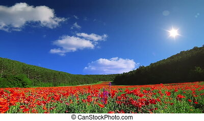 spring landscape - sky, lawn, cloud, field, grass, poppy