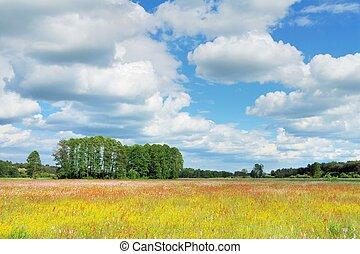 Spring Landscape - Spring landscape