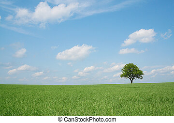 Spring landscape, lonely tree in a field