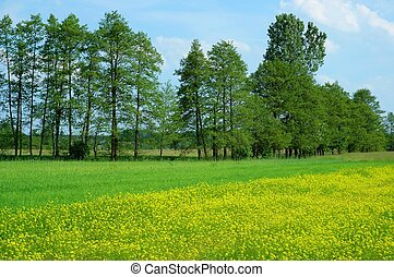 Spring Landscape - Meadow and trees