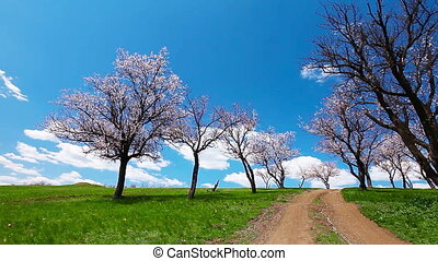 spring landscape