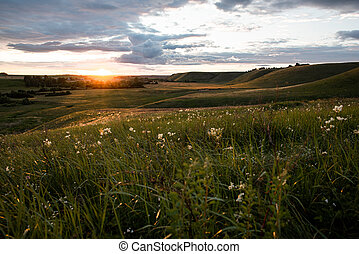 Spring landscape. Sunset over a field with hills, green grass, sun rays, white wildflowers in the foreground.