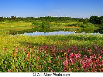 Spring Landscape - Wildflowers on spring landscape