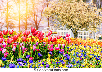 Spring landscape with beautiful tulips and multicolor flowers