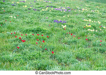 Spring landscape with blossoming wild flowers
