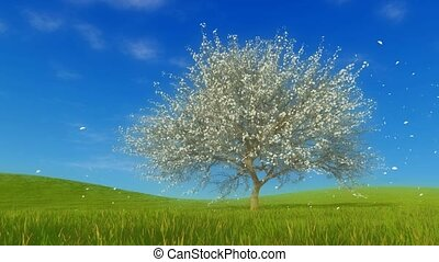 Spring landscape with cherry tree in full blossom - Spring...