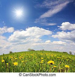spring landscape with dandelion flowers