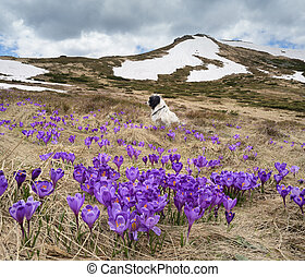 Spring landscape with flowers and dog