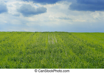 spring landscape with grassy field