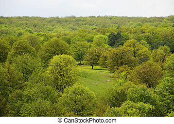 Spring landscape with green trees and glade