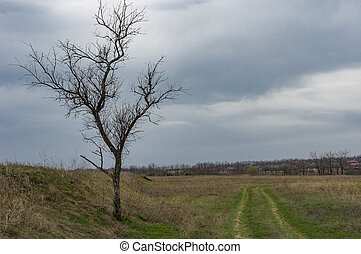 Spring landscape with lonely tree next  to earth road leading to suburb of Dnipro city, Ukraine