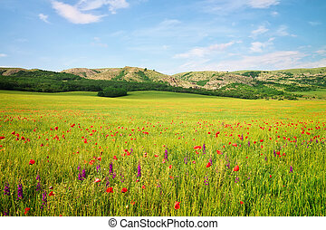 Spring landscape with meadow and flowers. Composition of nature.