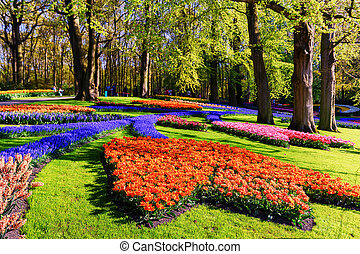 Spring landscape with multicolor tulips in beautiful city park