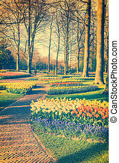 Spring landscape with park alley and multicolor flowers