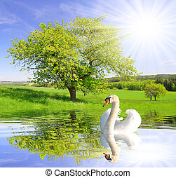 Spring landscape with swan on water