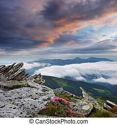 Spring landscape with the cloudy sky and Flower - Spring...