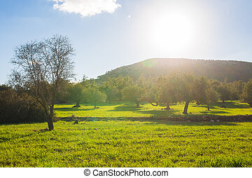 Spring landscape with trees, mountain and sun