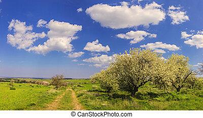 Spring landscape:flowering trees.