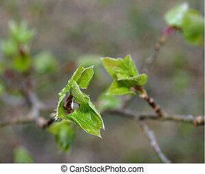 Spring Leaves 3958