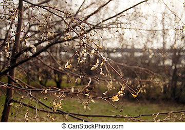 Spring lightness