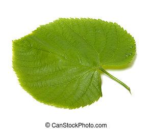 Spring linden-tree leaf