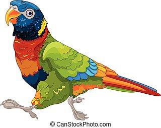 spring, lory, papegoja