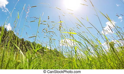 spring meadow in the wind and the sun - Spring meadow with...