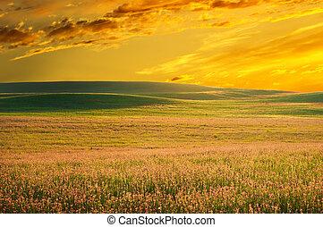Spring meadow of violet flower