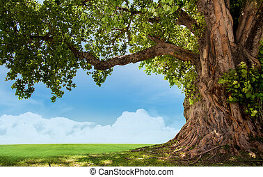 big tree images  Big tree Images and Stock Photos. 79,308 Big tree photography and ...