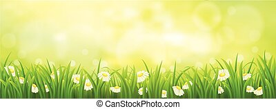 Spring meadow with chamomiles