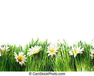 Spring Meadow with Daisies. Grass and Flowers