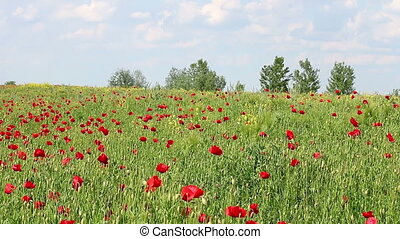 spring meadow with poppies flowers and trees