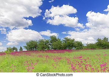 spring meadow with wildflowers in Bucha, Ukraine