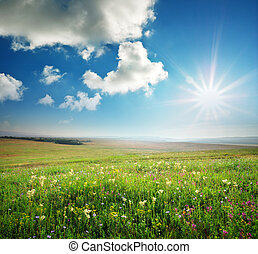 Spring morning in meadow of flowers. Composition of nature.