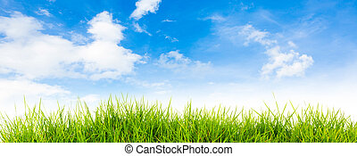Spring nature background with grass and blue sky in the back  , Summer time