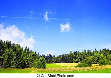 Spring nature landscape on blue sky