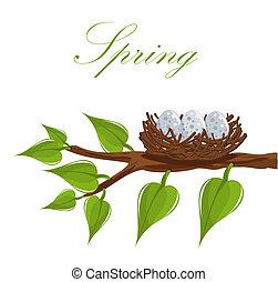 Spring nest - Bird nest on the tree branch. Spring is...