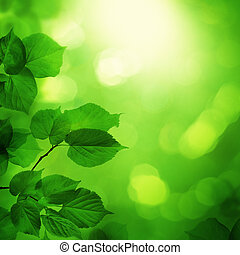 Spring night background with green leaves and sun bokeh light